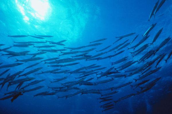 n-FISH-OCEAN-628x314
