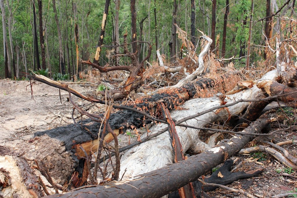 logging has commenced in bushfire affected forests at the South Coast