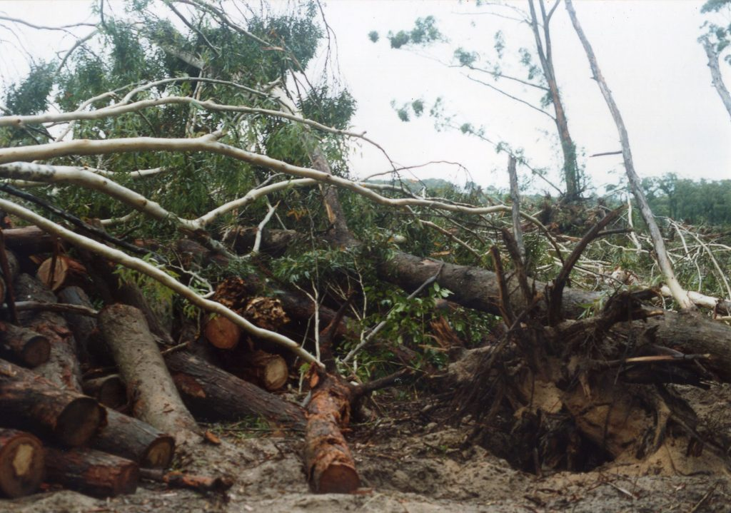 This photo shows the destruction from clearing of native trees of Baileys Island.