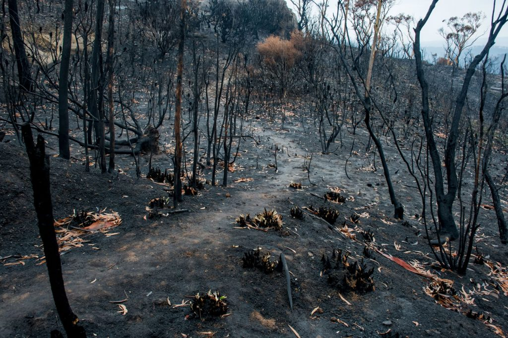 about 80 per cent of south coast forests were devastated by the black summer bushfires