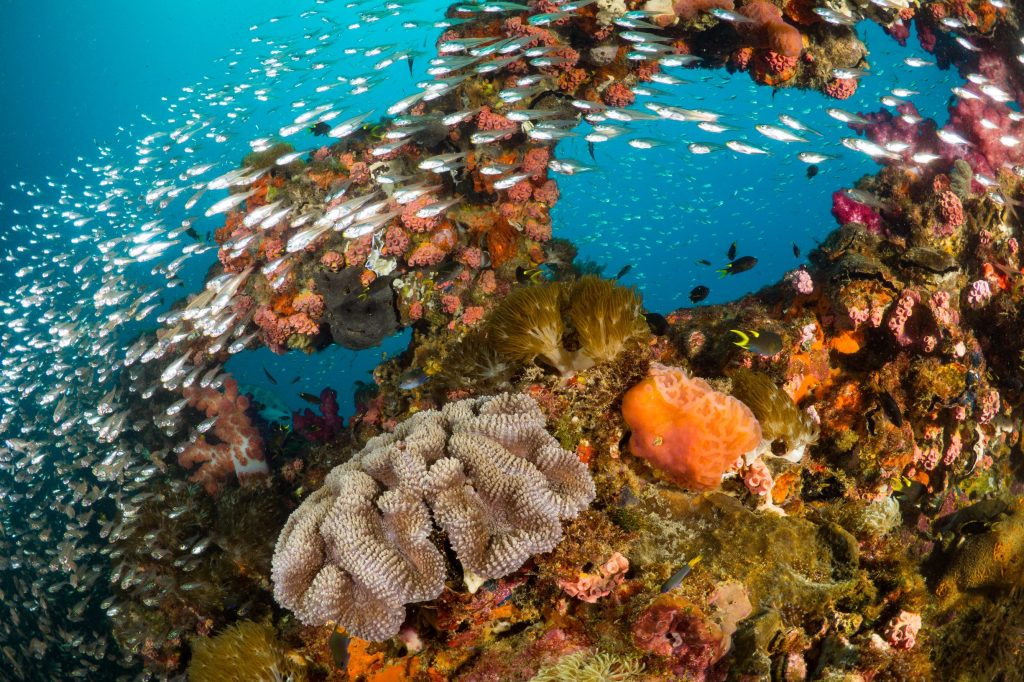 the vibrant colourful Great Barrier Reef is in great danger from temperature rice of the ocean