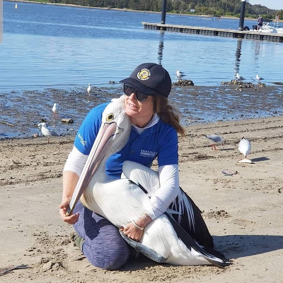 Lisa from Australian Seabird Rescue looking after an injured Pelican, a large proportion of wildlife rescues and care are done by volunteers in Australia