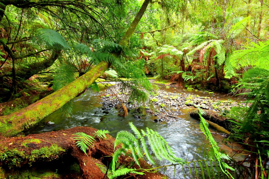 Beautiful rainforest, Tarkine, Tasmania