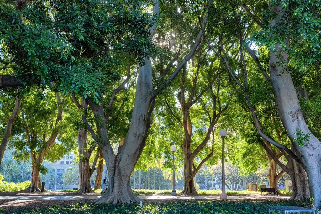 trees will keep our cities cooler and provide shade for people and habitat for animals and birds
