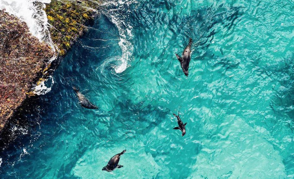Seals playing in the pristine waters of Jervis Bay Marine Park