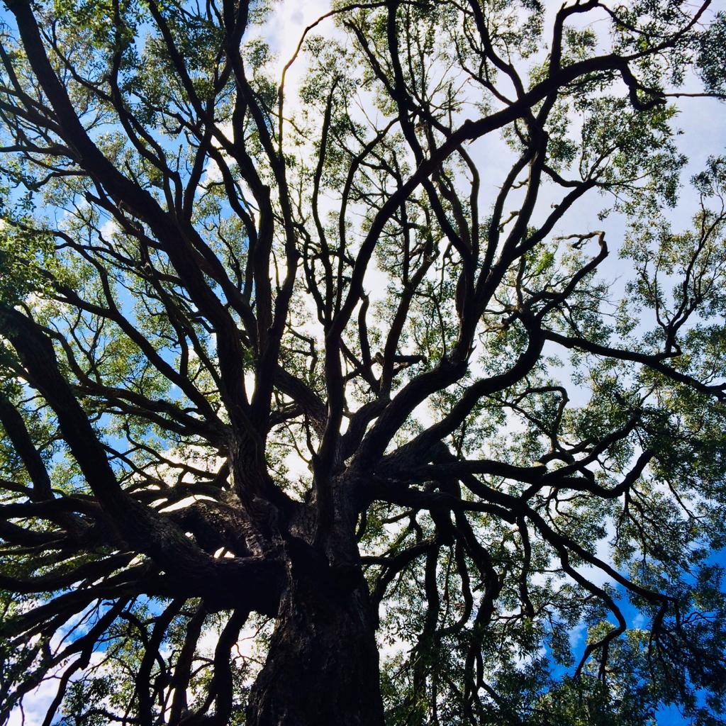 North Manyana forest and its habitat for wildlife under threat from new development