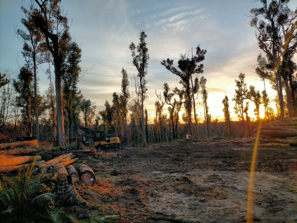 early morning at the logging site in Mogo Forest, south coast of NSW