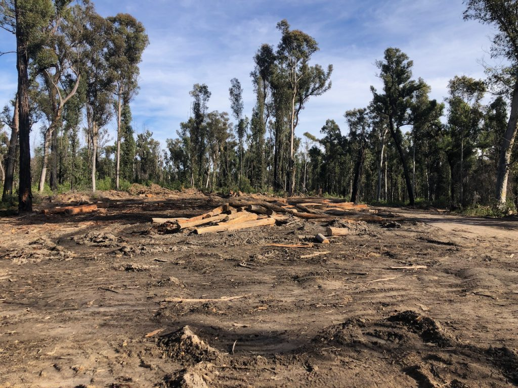 recently logged area in Mogo Forest where trees and wildlife habitat are still recovering from the Black Summer Bushfires