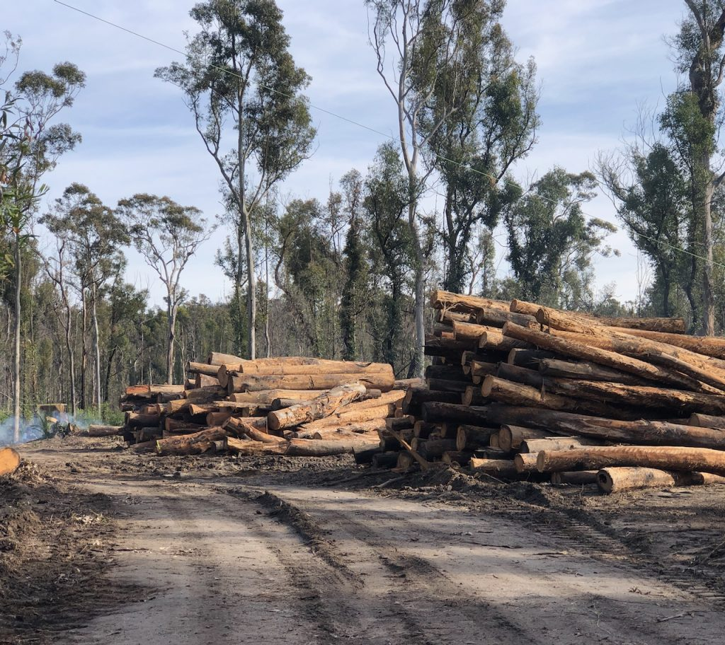logs and logs and logs of mature trees logged in bushfire affected areas of Mogo Forest