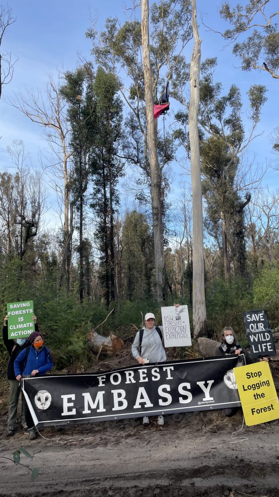 Forest defenders demanding climate action now