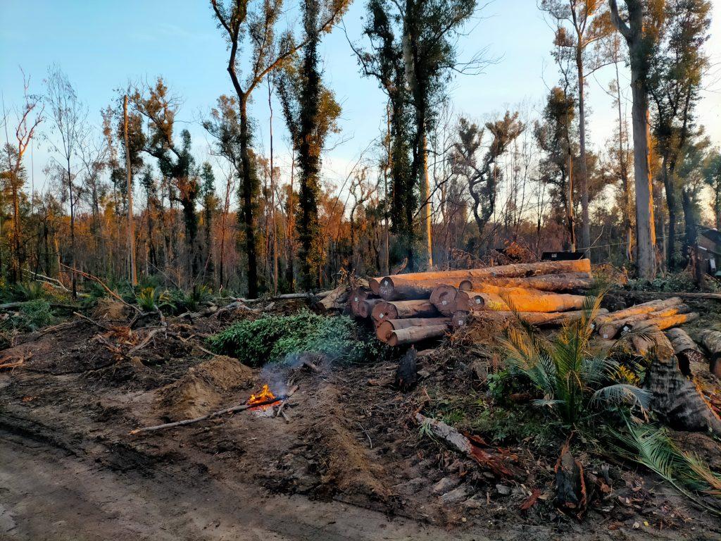 Logging in Mogo Forest after the 2019/2020 Black Summer Bushfires is madness