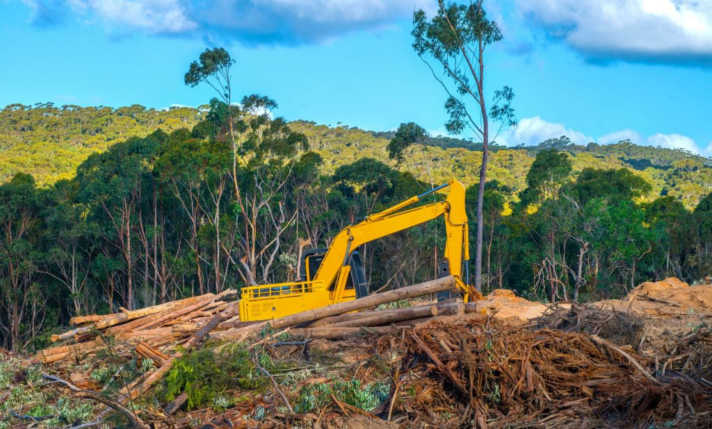 Native forest logging at NSW south coast for wood chips for export from Eden wood chip mill